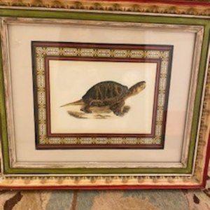 John-Richard Tortoise Prints